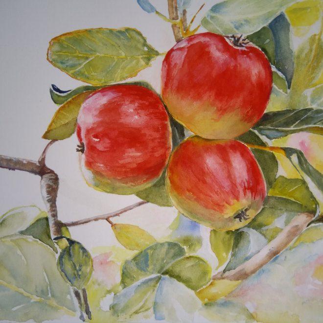 Apples (Barbara Hope)