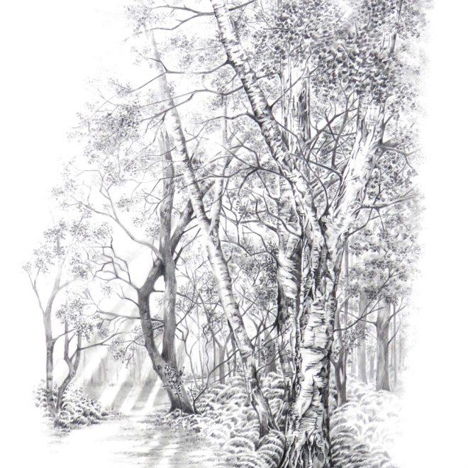 Badger Wood (Ann Biggs)