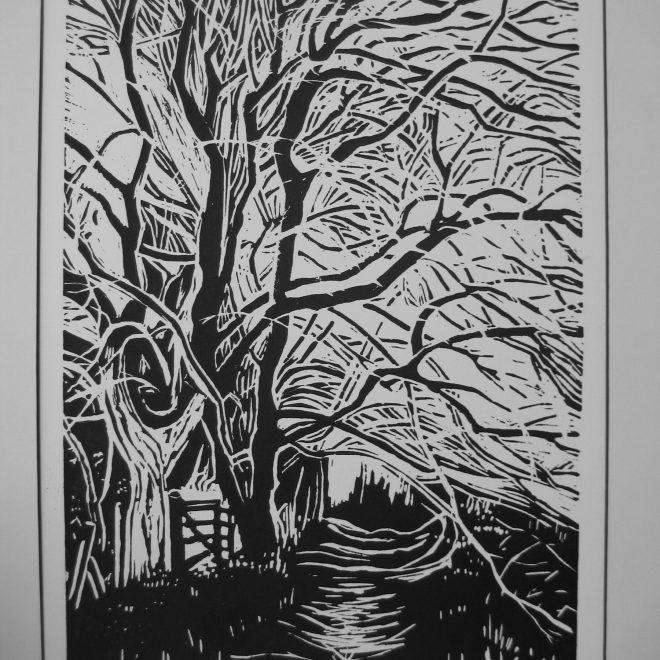 Beech Trees (Liz Beardwell)