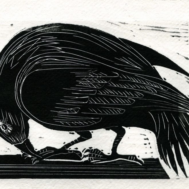Crow (Clare Trowell)