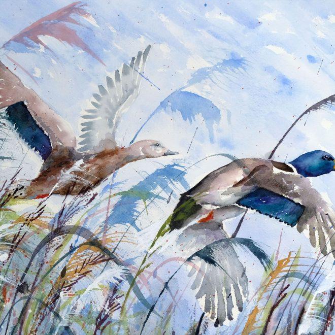 Ducks Leaving (Ros Ridley)