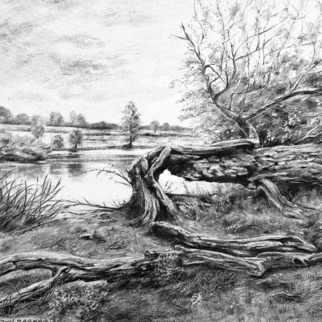 Fallen Willow at Wimpole (Colin Barker)