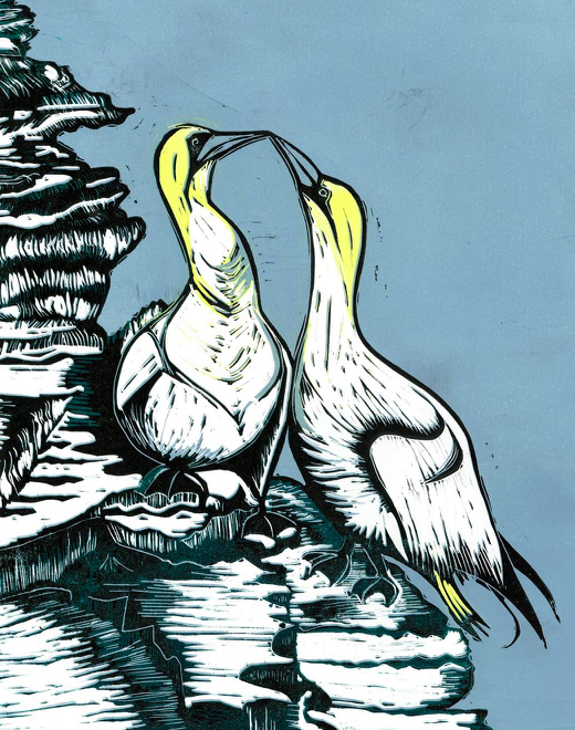 Gannets (Clare Trowell)