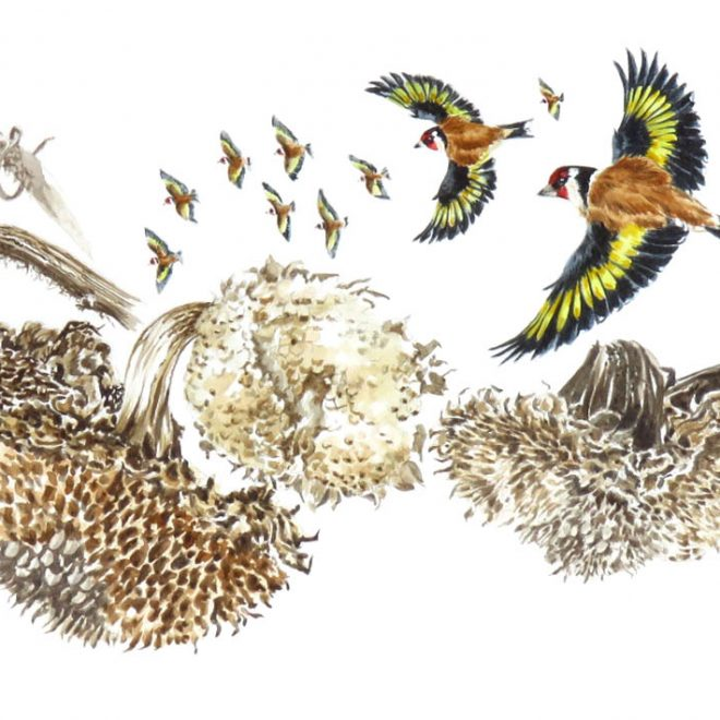 Goldfinches(Ann Biggs)