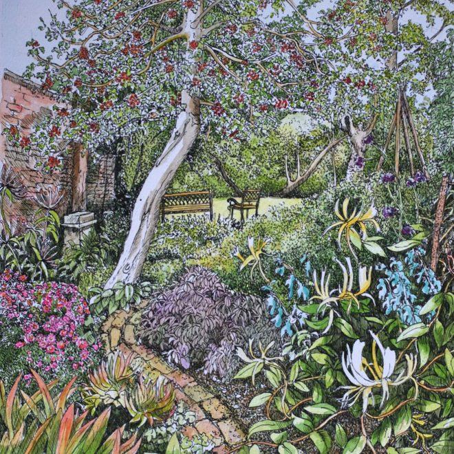 Holly-tree,-Challis-Garden-(Fran-Godwood)