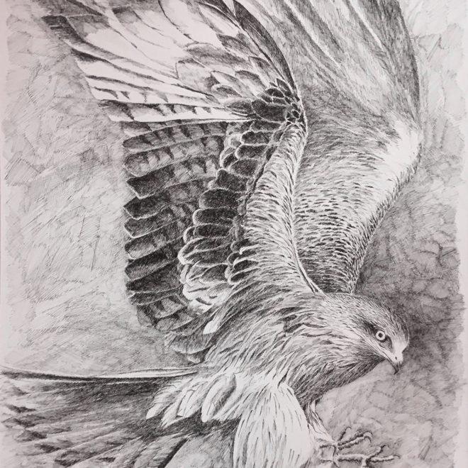Kite (Chris Hewitt)