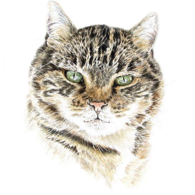 Maggies Cat (Ann Biggs)