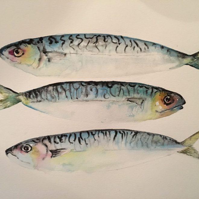 Norfolk Mackerel (Helen Clarke)