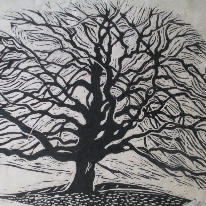 Oak Tree (Liz Beardwell)