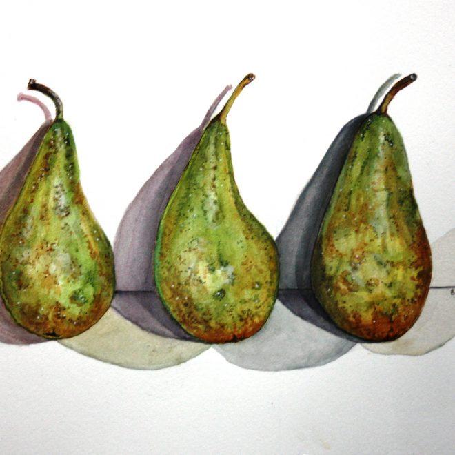 Pears (Barbara Hope)