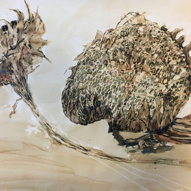 Sunflower Heads (E J Taylor)