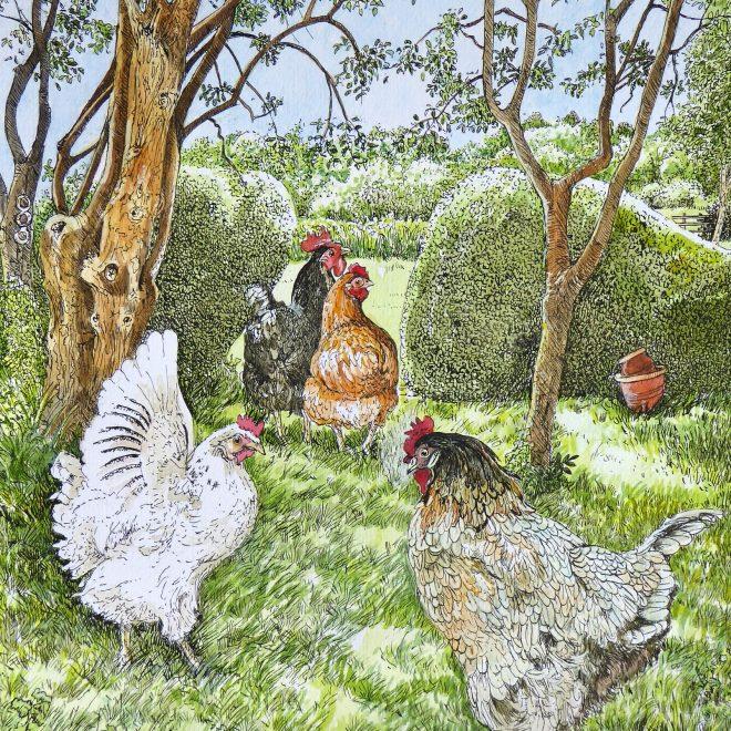 Sylvia's chickens (Fran Godwood)