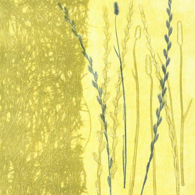 Tangled grasses (Anna Pye)