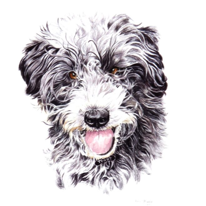 Teddy (Ann Biggs)