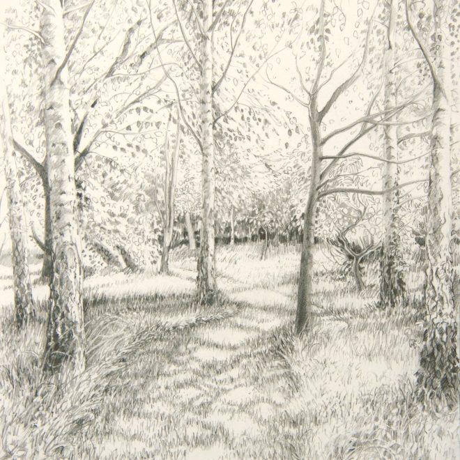 The Birch-wood Path (Ann Brown)