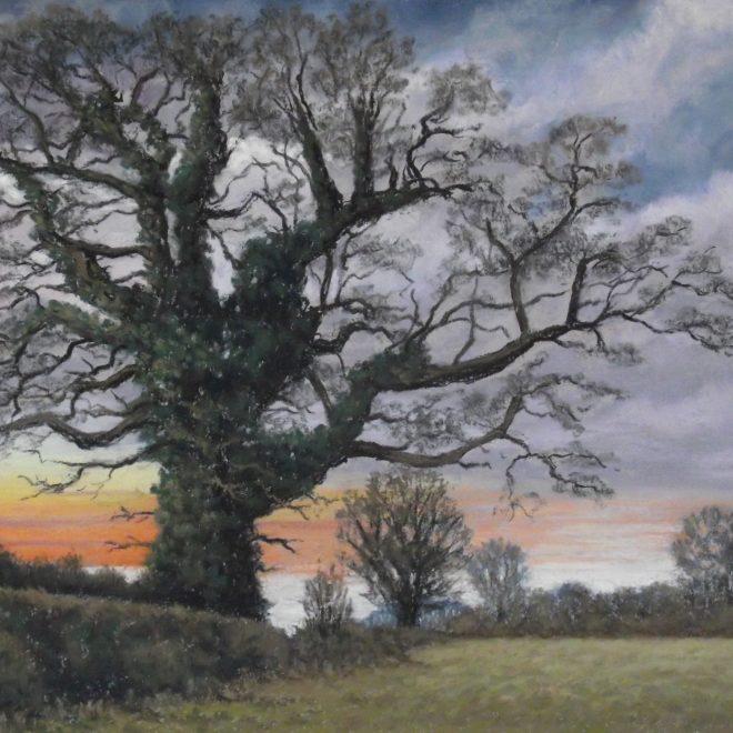The Oak in Winter (Colin Hayes)