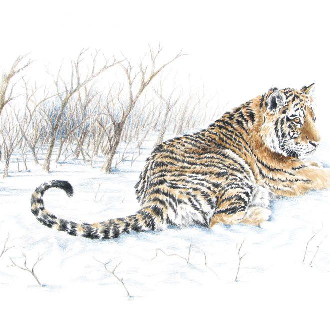 Tiger in Snow (Ann Biggs)