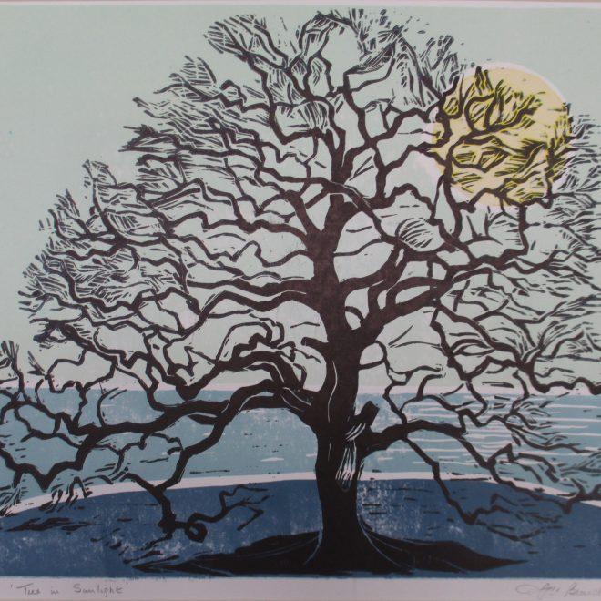 Tree in Sunlight (Liz Beardwell)