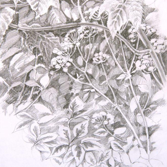 Undergrowth, Wolfson College (Ann Brown)