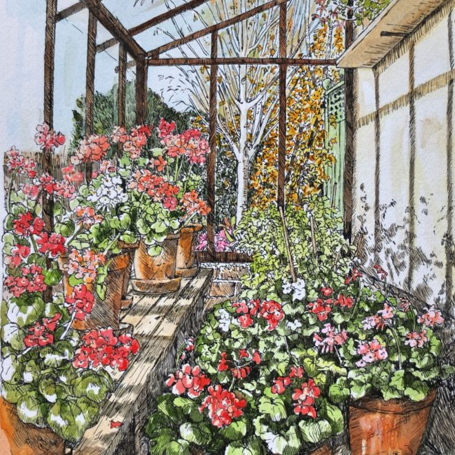Wintering geraniums (Fran Godwood)