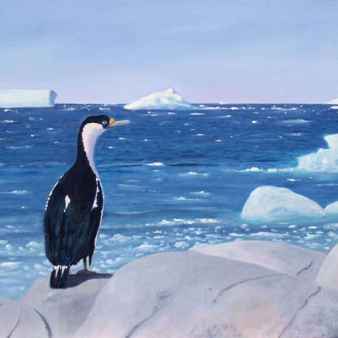 Blue-eyed-shag-keeping-sharp-lookout-(Paul-Rodhouse)