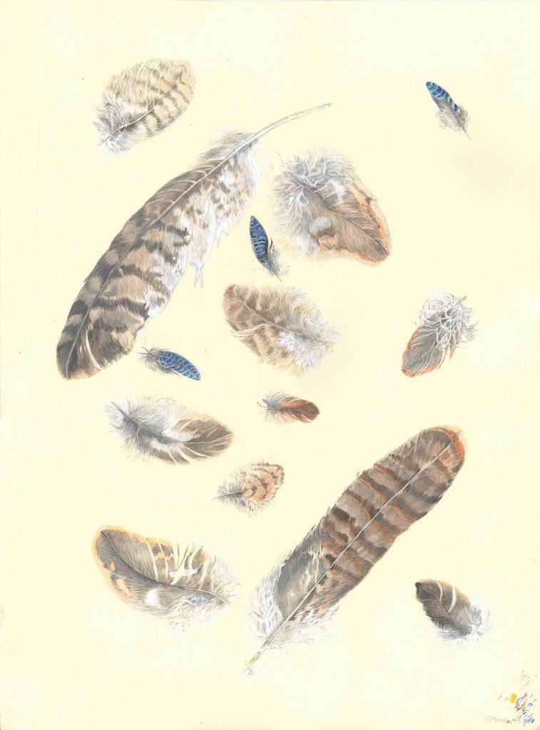 Buzzard-Feathers-(Jenny-Wilson)