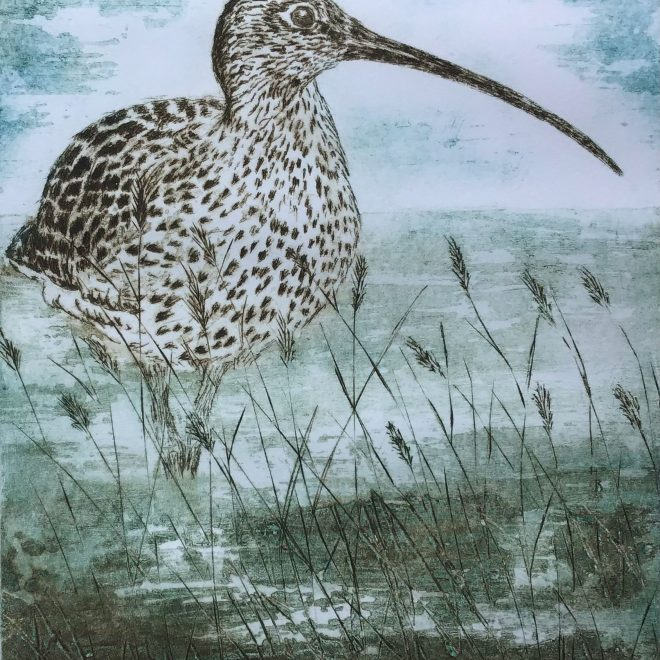 Curlew-by-the-River-Greta-(Sherry-Rea)