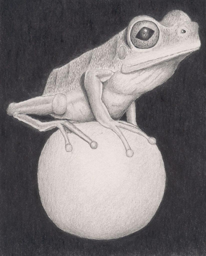 Frog-(Tim-Milner)