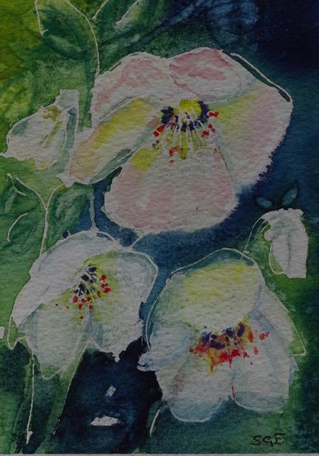 'Hellibore'  Watercolour. (Card).    Sarah G Freedman