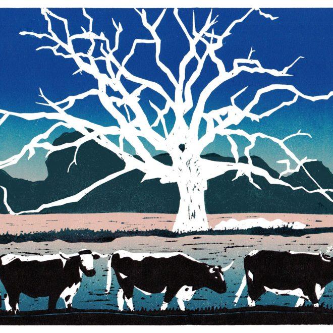Ox-Meadow,-Fulbourn-(jackie-duckworth)