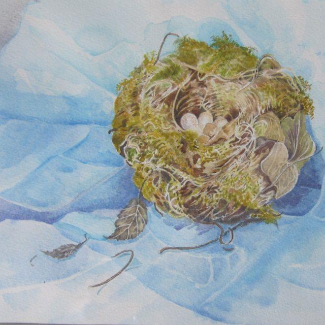 Robin's-nest-(Jenny-Wilson)