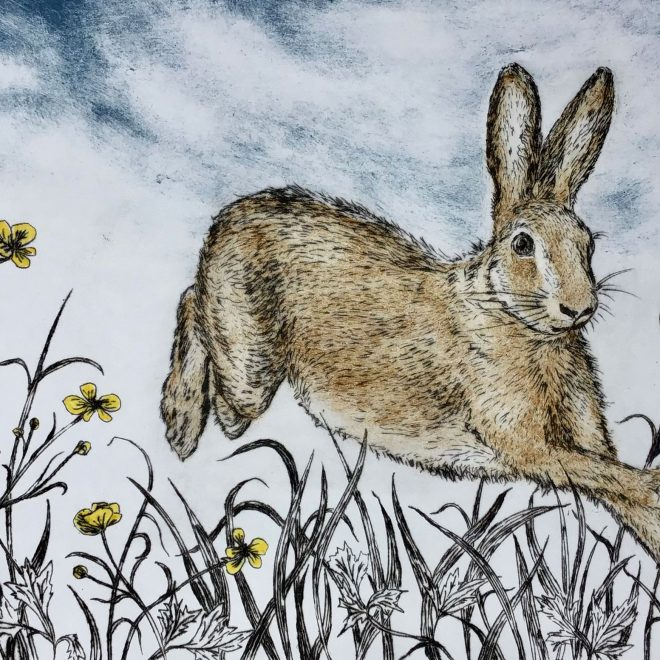 Summers'-Hare-(Sherry-Rea)