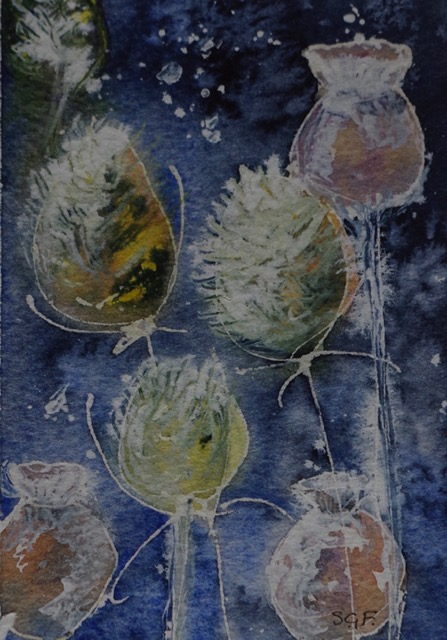 Teasels.  Watercolour and ink. (Card).    Sarah G Freedman