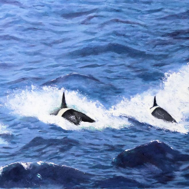 The-Orca-family-(Paul-Rodhouse)