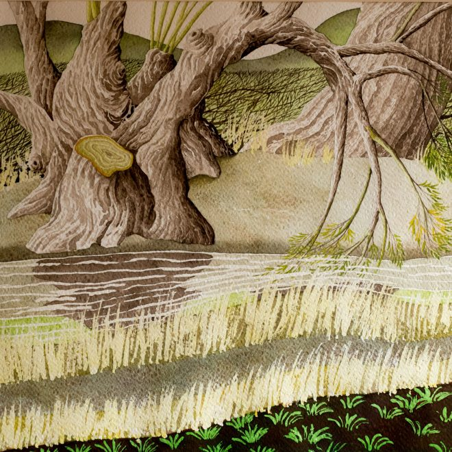Willows-by-the-Brook-(Vera-Rosenberry)