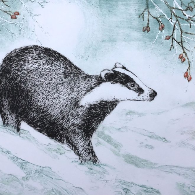 Winter's-Badger-(Sherry-Rea)